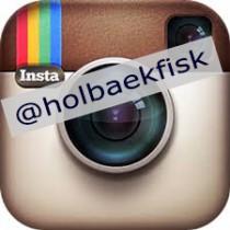 Insta @holbaekfisk